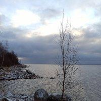 Декабрь на Ладожском озере :: VL