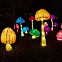 Фестиваль световых фигур :: Marina Pavlova
