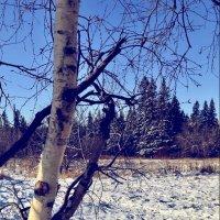 Начало зимы :: София Кец
