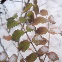 А зима была только один день в декабре :: Елена Семигина