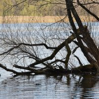 Весна в Серебряном бору... :: Наташа *****