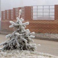 Волшебная игра зимы :: Татьяна Смоляниченко