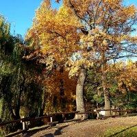 Осенние дубы и ивы у пруда в парке... :: Лидия Бараблина