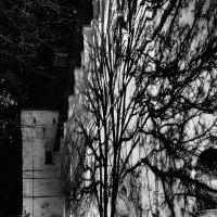 Дерево :: Константин Поляков