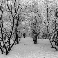 Зимние узоры! :: Николай Кондаков
