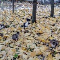 Осенний котопад :: Регина Пупач