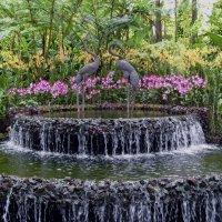 Фонтан в парке орхидей  Сингапура :: Ольга Довженко