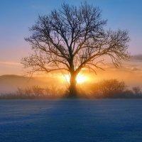 холодный зимний рассвет :: Elena Wymann