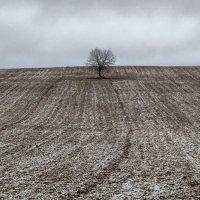 Первый снег :: shvlad