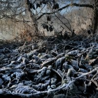 Рассветные джунгли осени... :: Андрей Войцехов