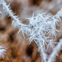 Игольчатый, замороженный.. :: Юрий Стародубцев