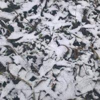 Снежок :: Митя Дмитрий Митя