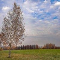 В поле... :: Владимир Жданов