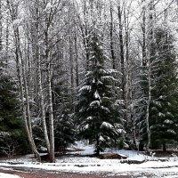 Снег октября :: Светлана Петошина