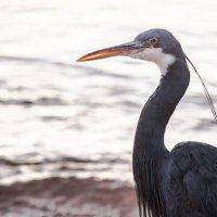 Морская птица на пляже :: Олег
