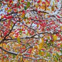 Яблоки в снегу :: Andzhin