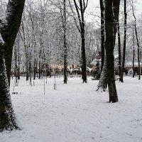 Репортаж из предновогоднего городского сада. :: Милешкин Владимир Алексеевич