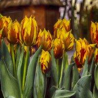 Кусочек весны в Новый год !!!! :: Alexander Andronik