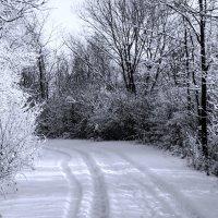 Ура! Зима пришла! Снег выпал... :: Alex ARt