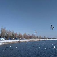 Птички :: Андрей Солан
