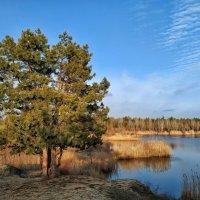 2 января - тепло, птицы поют, травка зеленеет, солнышко блестит... :: Елена (Птичка Э)
