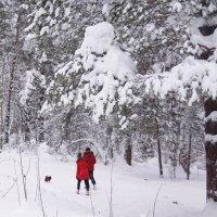 Трое в зимнем лесу :: Наталия Григорьева