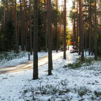 Катынский лес (из поездок по области) :: Милешкин Владимир Алексеевич