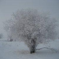 Зима :: Anna Ivanova