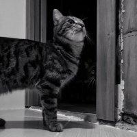 Найди второго кота))) :: Наталья Ерёменко