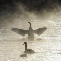 озеро Светлое Алтай :: Ирина Малышева