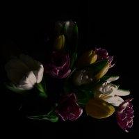 Тюльпаны :: Tanja Gerster