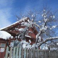 майский снег :: Елена Шаламова