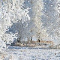Зима  в  лесу :: Геннадий Супрун