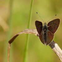 а вот и бабочки опять..23 :: Александр Прокудин