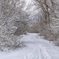Прогулка в зимний лес :: Игорь Сикорский