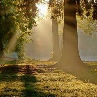 Утро в парке..... :: Юрий Цыплятников