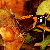 а вот и бабочки опять..26 :: Александр Прокудин
