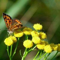 а вот и бабочки опять..27 :: Александр Прокудин