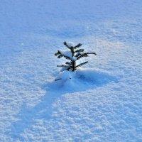 Мороз снежком укутывал... :: Кулага Андрей Андреевич