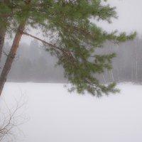 Ветка сосны на фоне зимнего леса :: Cissa Andebo