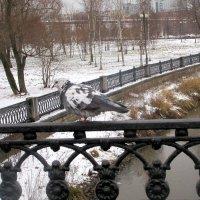 Пейзаж с голубем :: Ольга Довженко