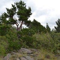 Керейский горный лес :: Андрей Хлопонин