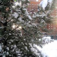 Зимой в городе :: Елена Семигина