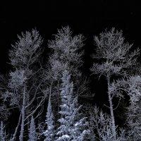 Ночь в Январе :: Павел Крутенко