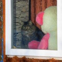 кошка за окошком :: Андрей + Ирина Степановы