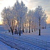 Остров Татышев в январе :: Екатерина Торганская