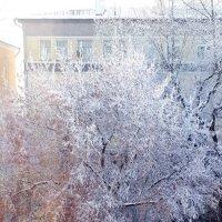 морозное утро :: Наталья Тимофеева