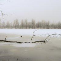 Грустное утро :: Андрей Зайцев