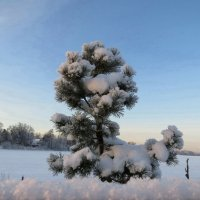Морозный день! :: Вера Щукина