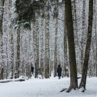 Снег выпал в январе... :: Владимир Безбородов